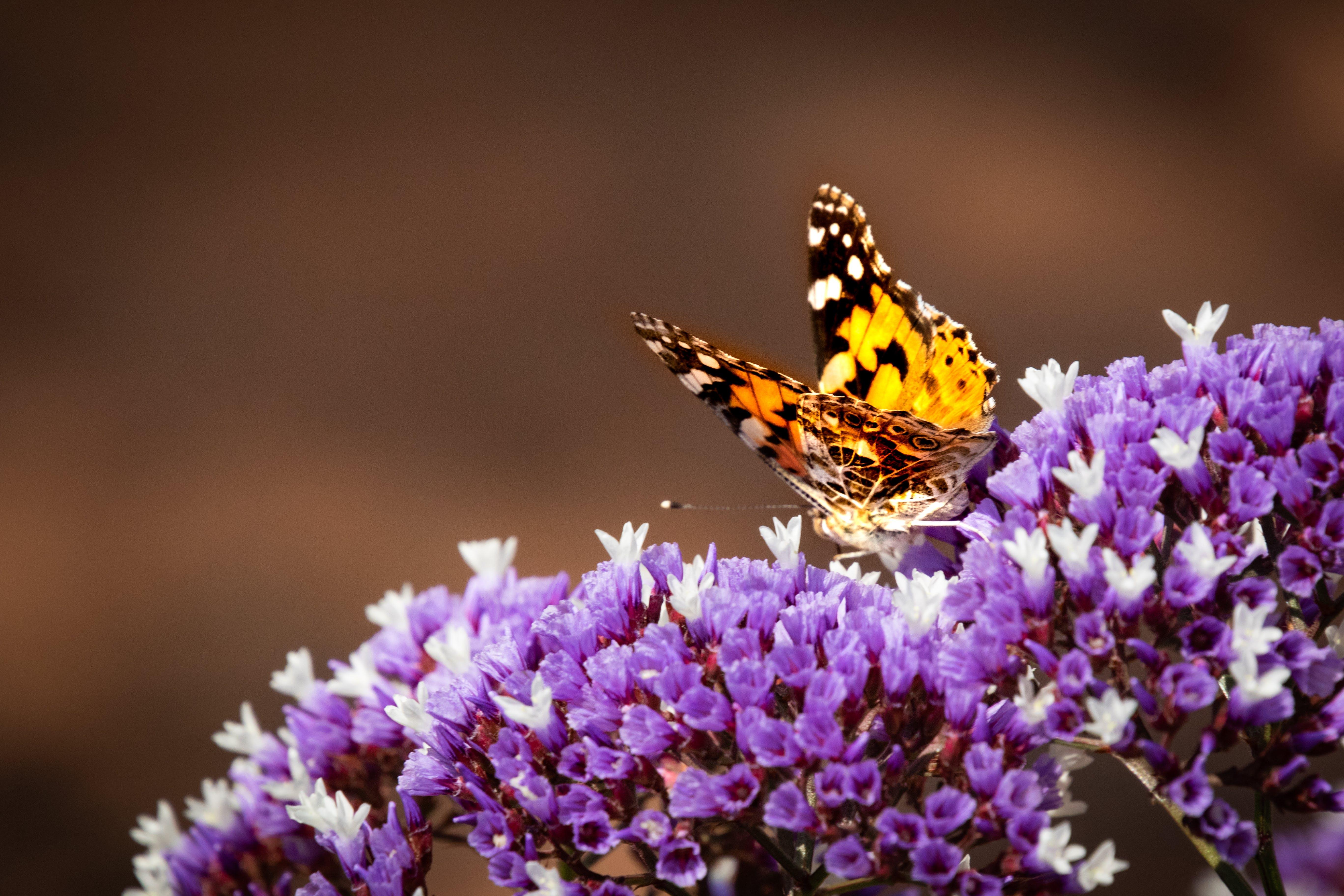 Free stock photo of summer, garden, animals, flower