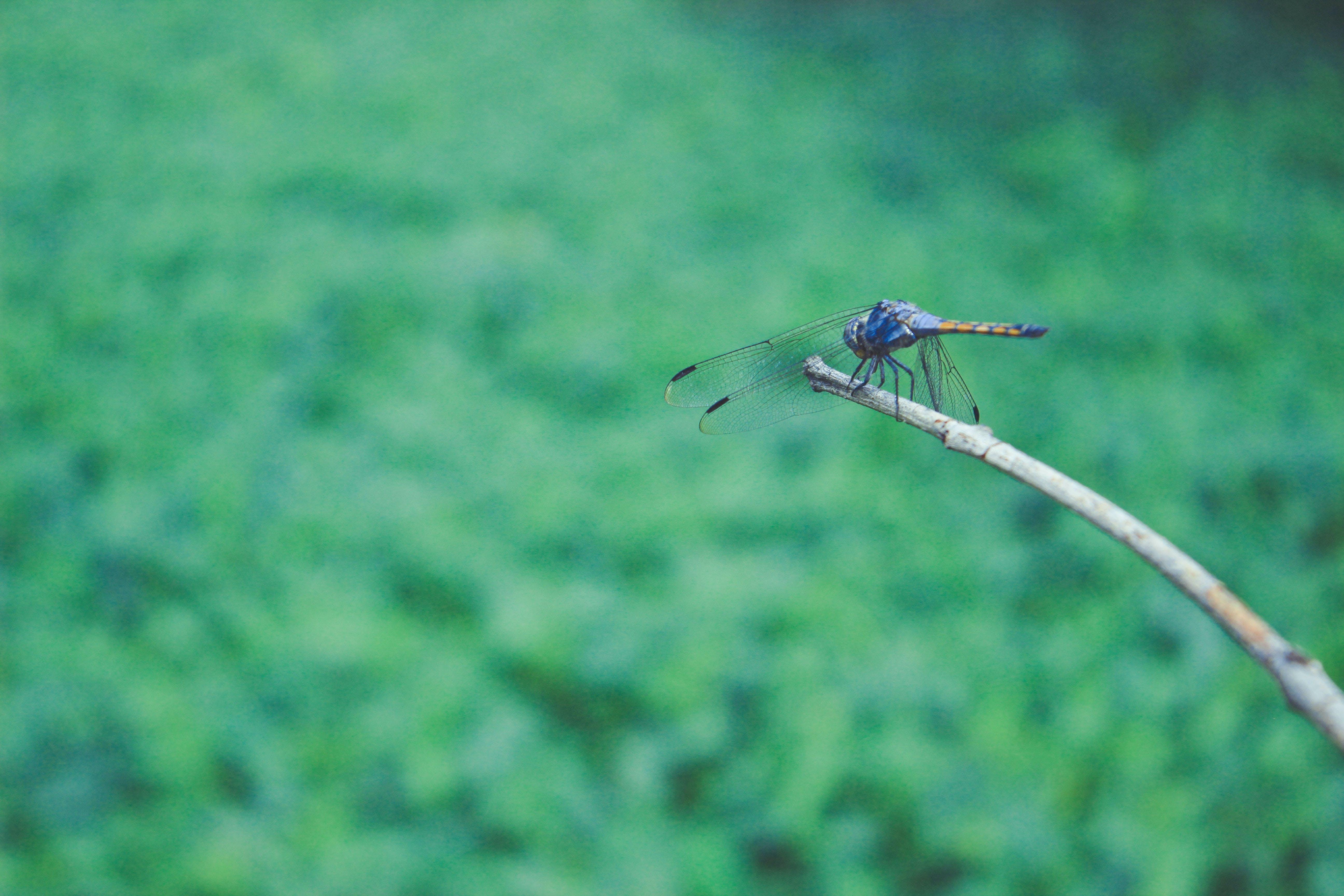 Základová fotografie zdarma na téma přírodní, vážka, zelená, zvíře
