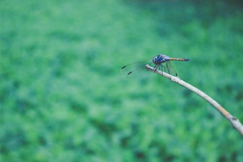 Free stock photo of animal, dragonfly, green, natural