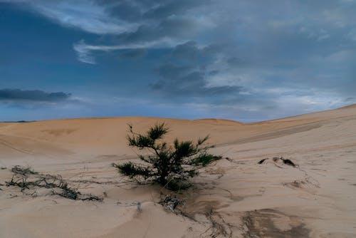 Ingyenes stockfotó hangulatos felhős, homokdűne témában