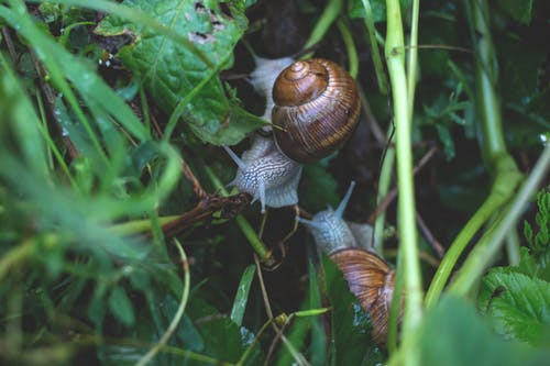Brown Snails on Green Plant