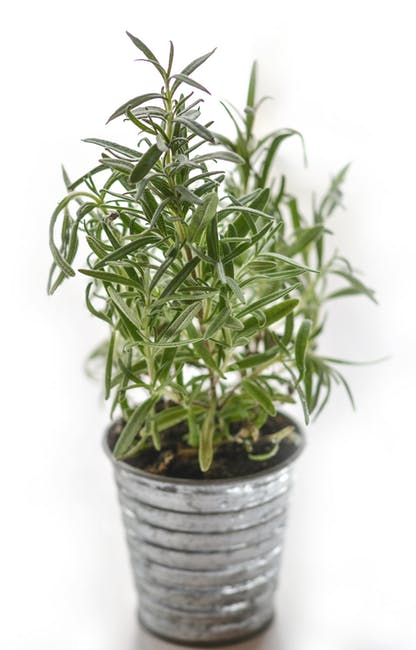 15 Health-Boosting Indoor Herbs You Must Have At Home