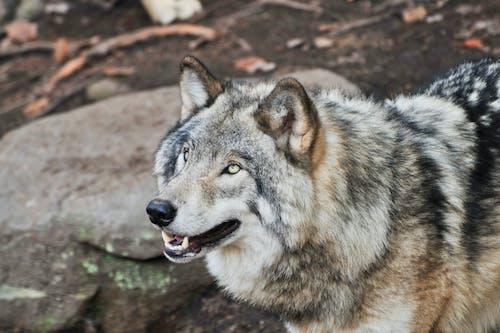 Photos gratuites de animal, étendue sauvage, forêt, fourrure