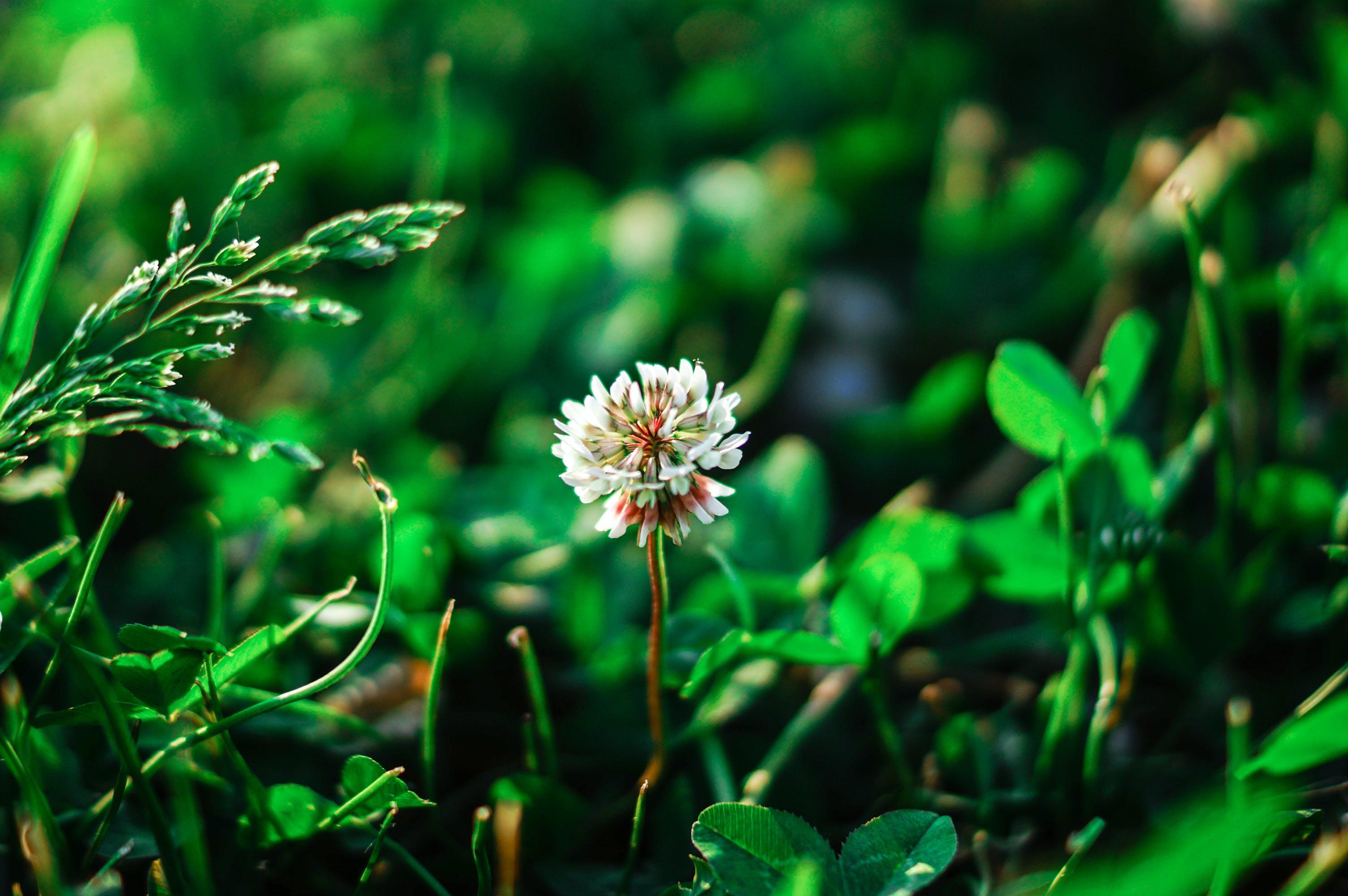 Kostenloses Stock Foto zu blätter, botanischen, feld, gras