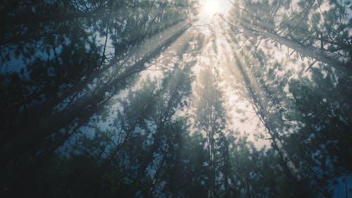 Gratis lagerfoto af 4k-baggrund, desktop tapet, skov, sol
