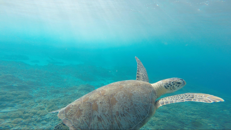 Základová fotografie zdarma na téma divočina, lastura, moře, mořská voda