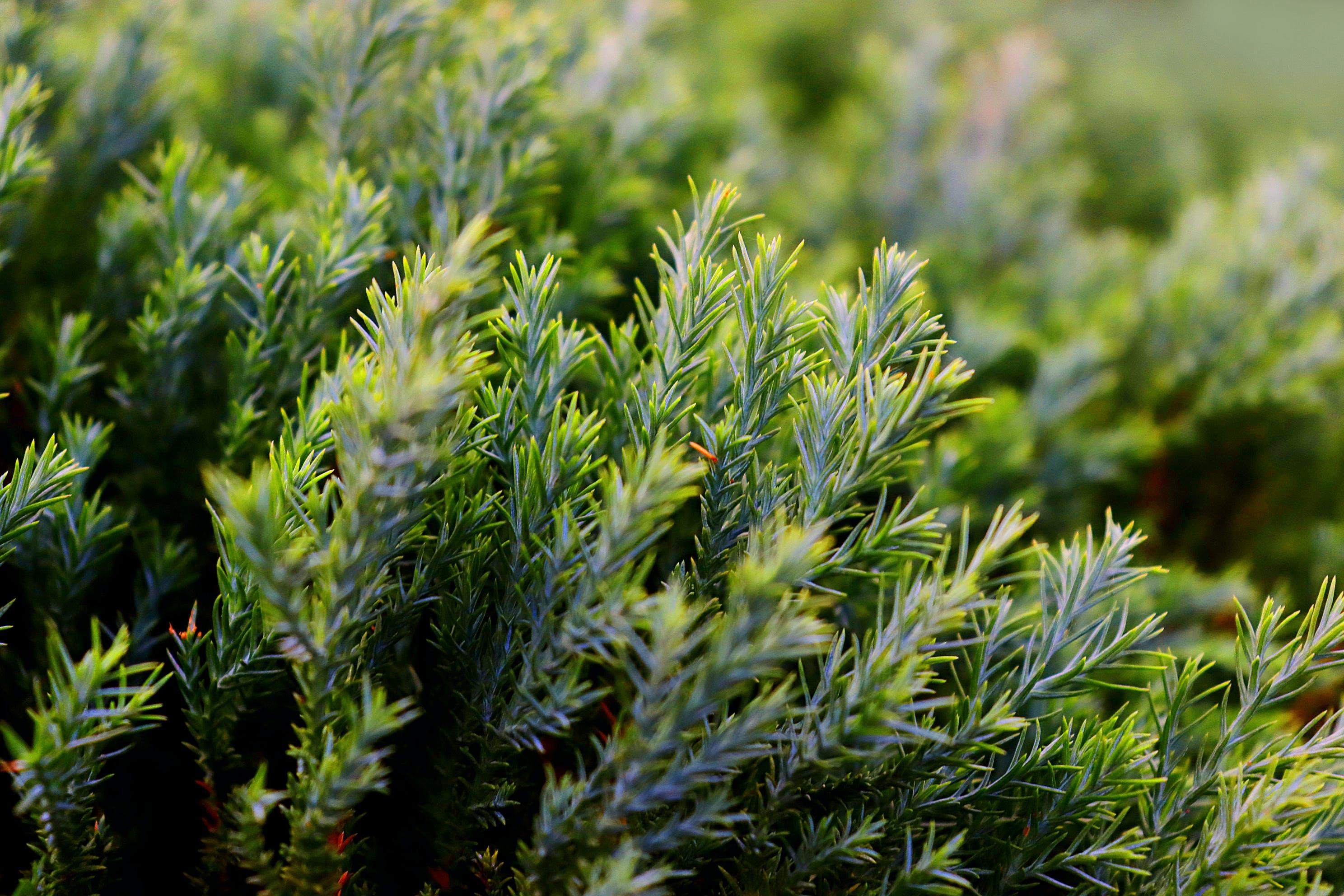 Free stock photo of dark green, desktop background, grass, green