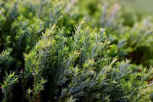 Free stock photo of dark green, desktop background, grass