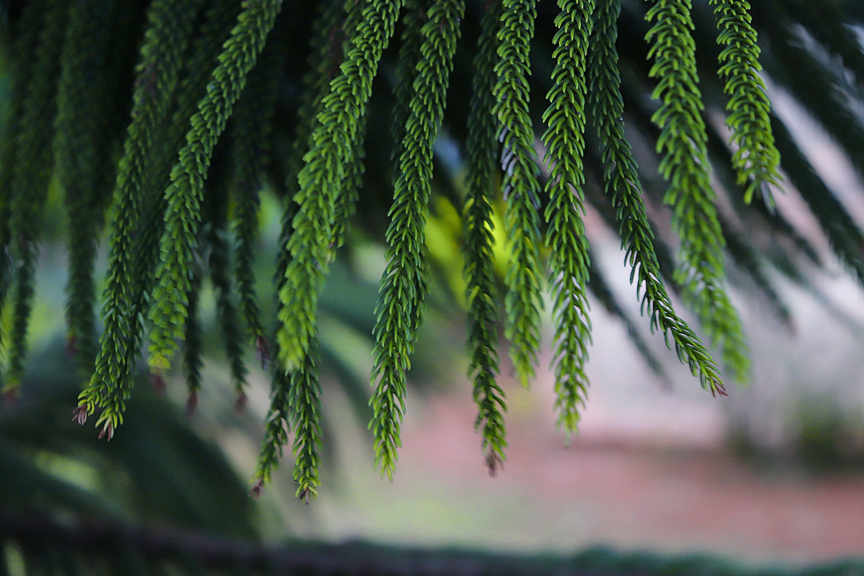 Free stock photo of desktop background, green, leaf, nature