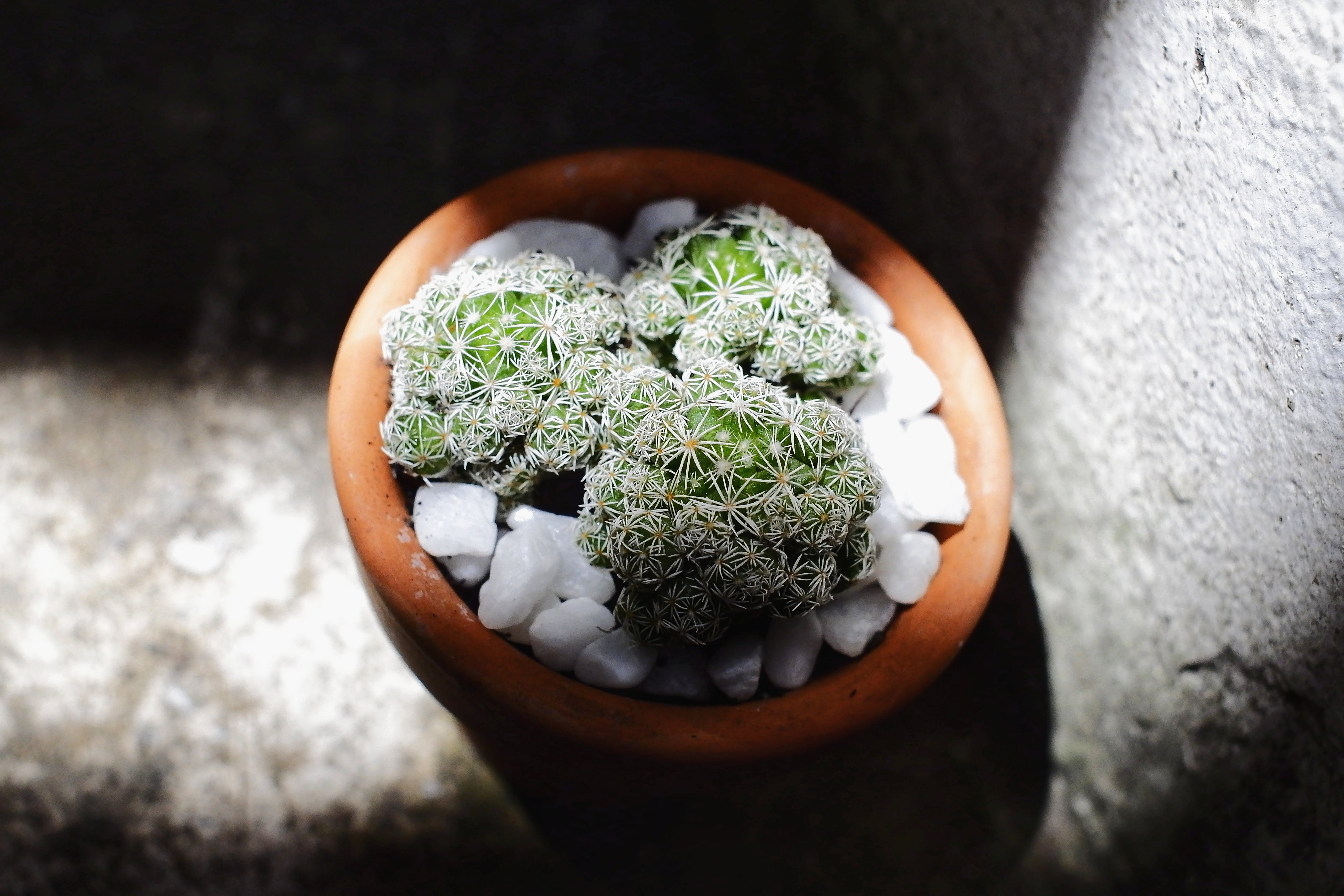 Selective Focus Photo of Green Succulent Plant