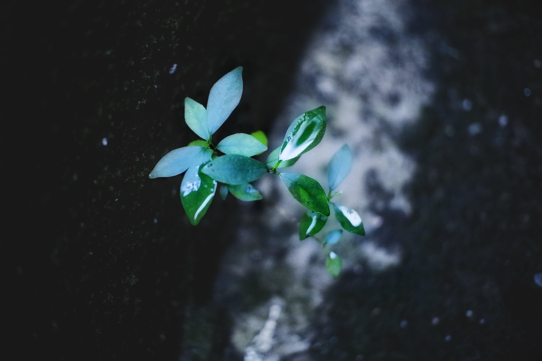Kostenloses Stock Foto zu blätter, blühen, blüte, dunkel