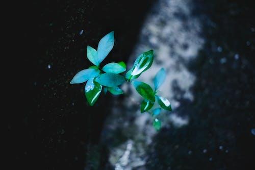 Gratis lagerfoto af close-up, farver, haveplante, miljø