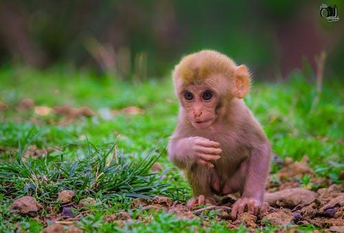 Gratis arkivbilde med ape, apekatt, søte dyr
