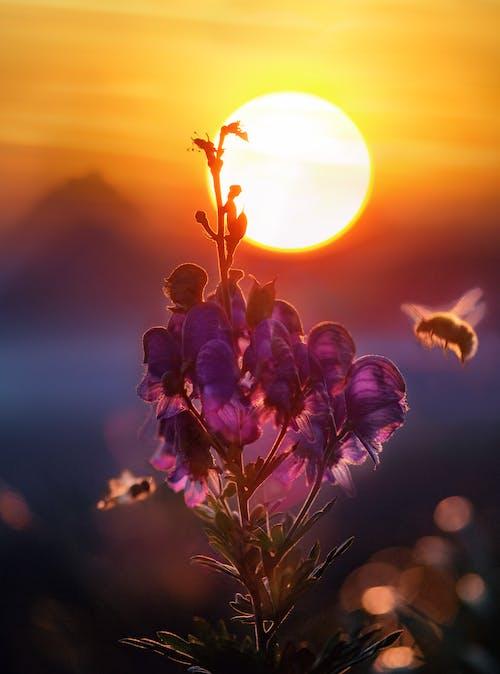 คลังภาพถ่ายฟรี ของ การถ่ายเรณู, การบิน, ดวงอาทิตย์, ดอกไม้