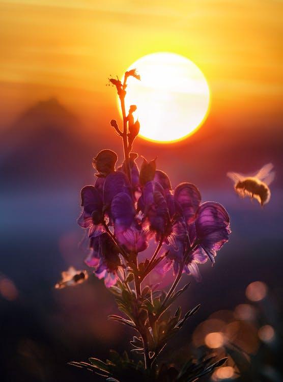 Flores Moradas En Flor