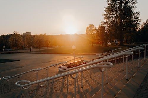 Δωρεάν στοκ φωτογραφιών με ακτίνες ηλίου, απόγευμα, αυγή, δέντρα