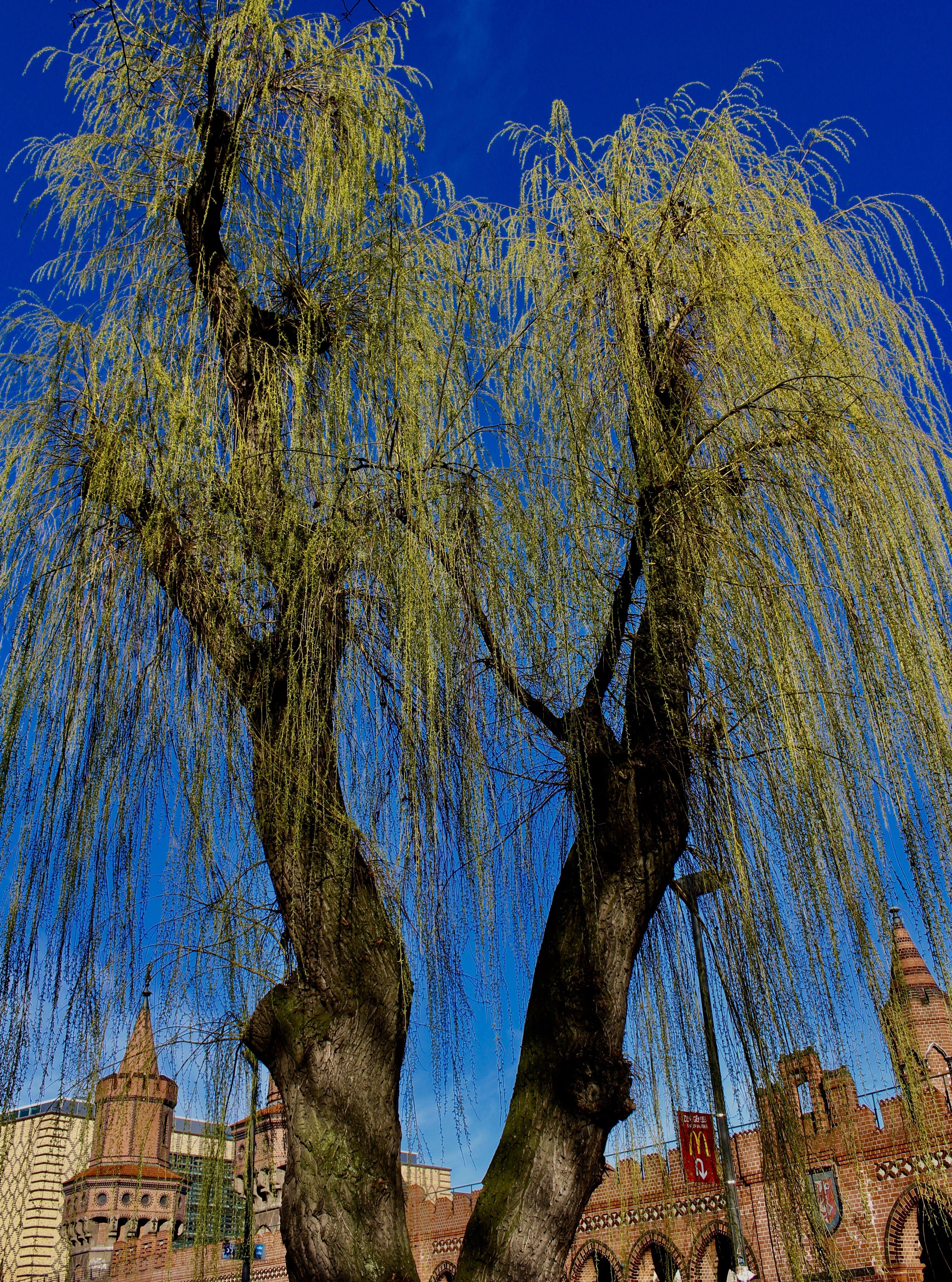 Безкоштовне стокове фото на тему «urbanscene, urbantree, блакитне небо»