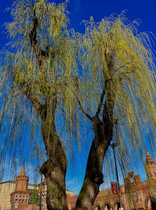 Gratis stockfoto met blauwe lucht, urbanscene, urbantree