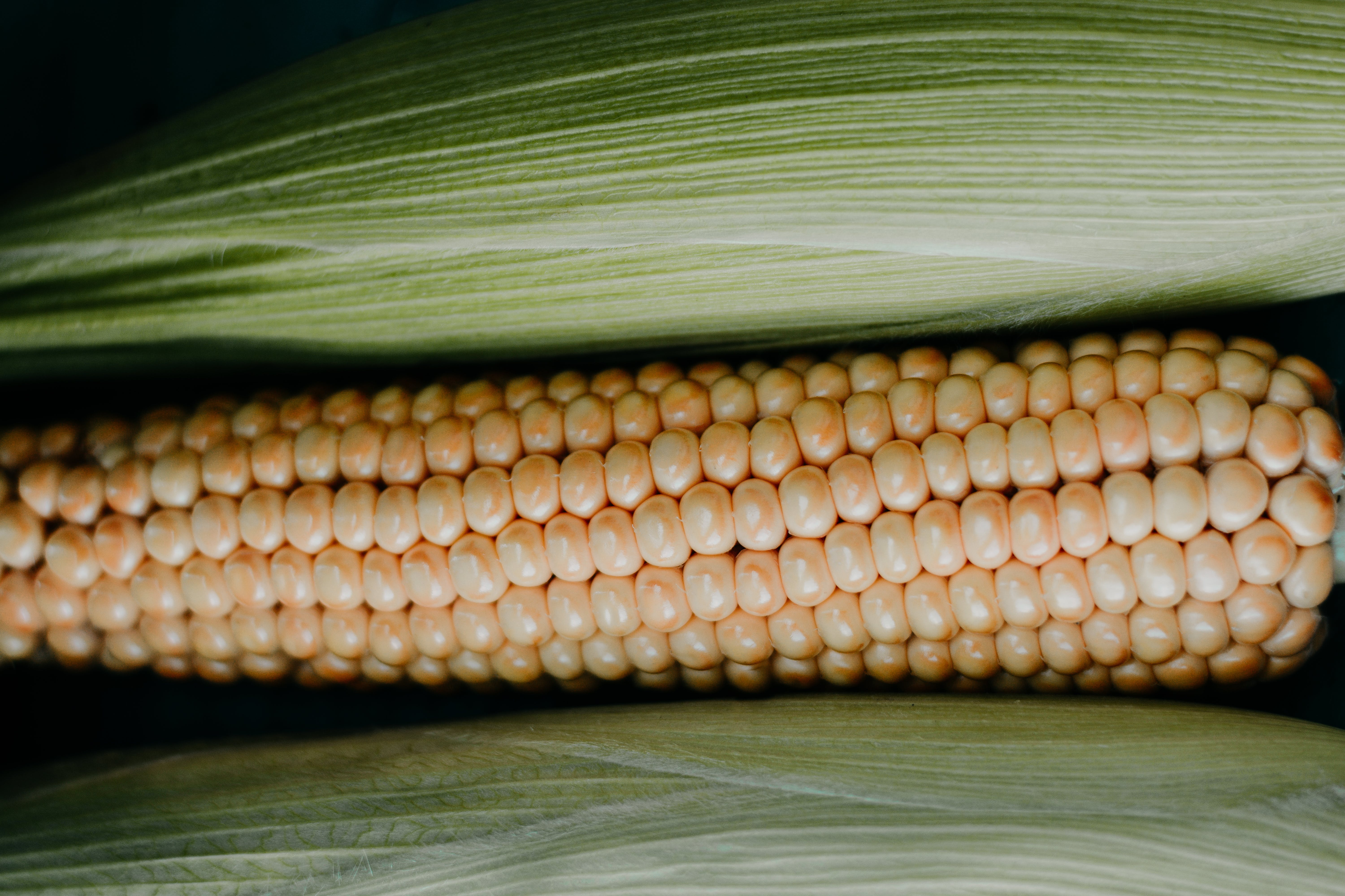 Close-up Photo of Corn