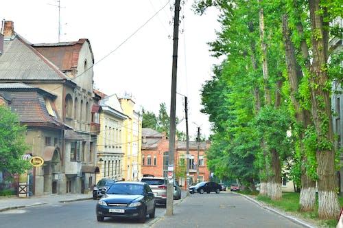 Foto d'estoc gratuïta de arbres, carrer, carretera, cotxes