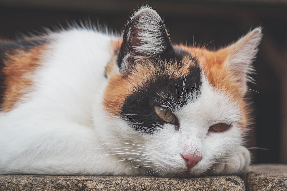 Black, White and Orange Cat Outdoor