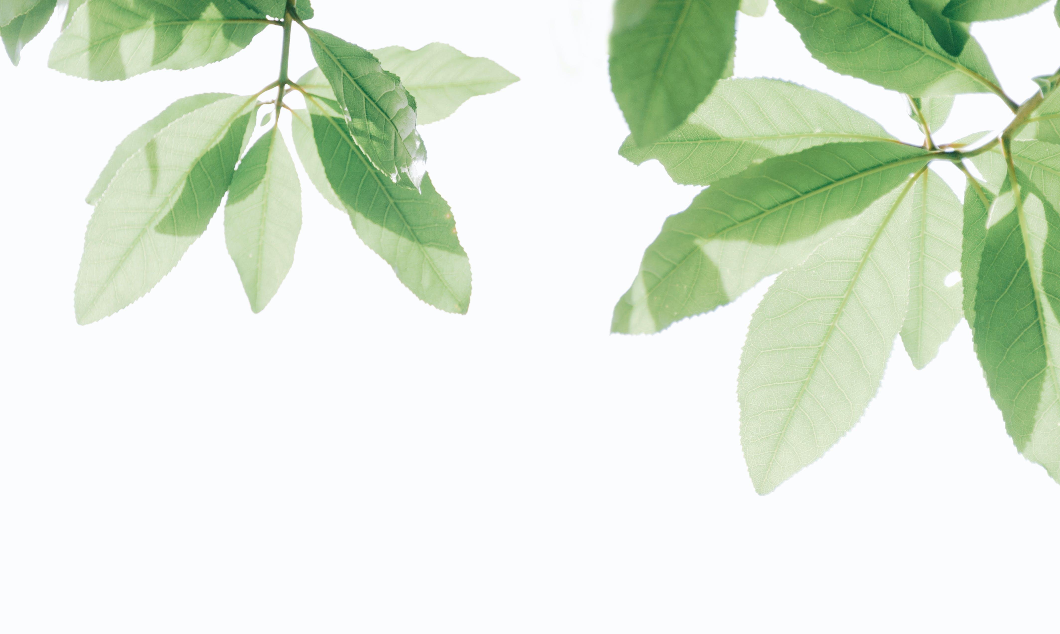 Immagine gratuita di albero, crescita, estate, freschezza