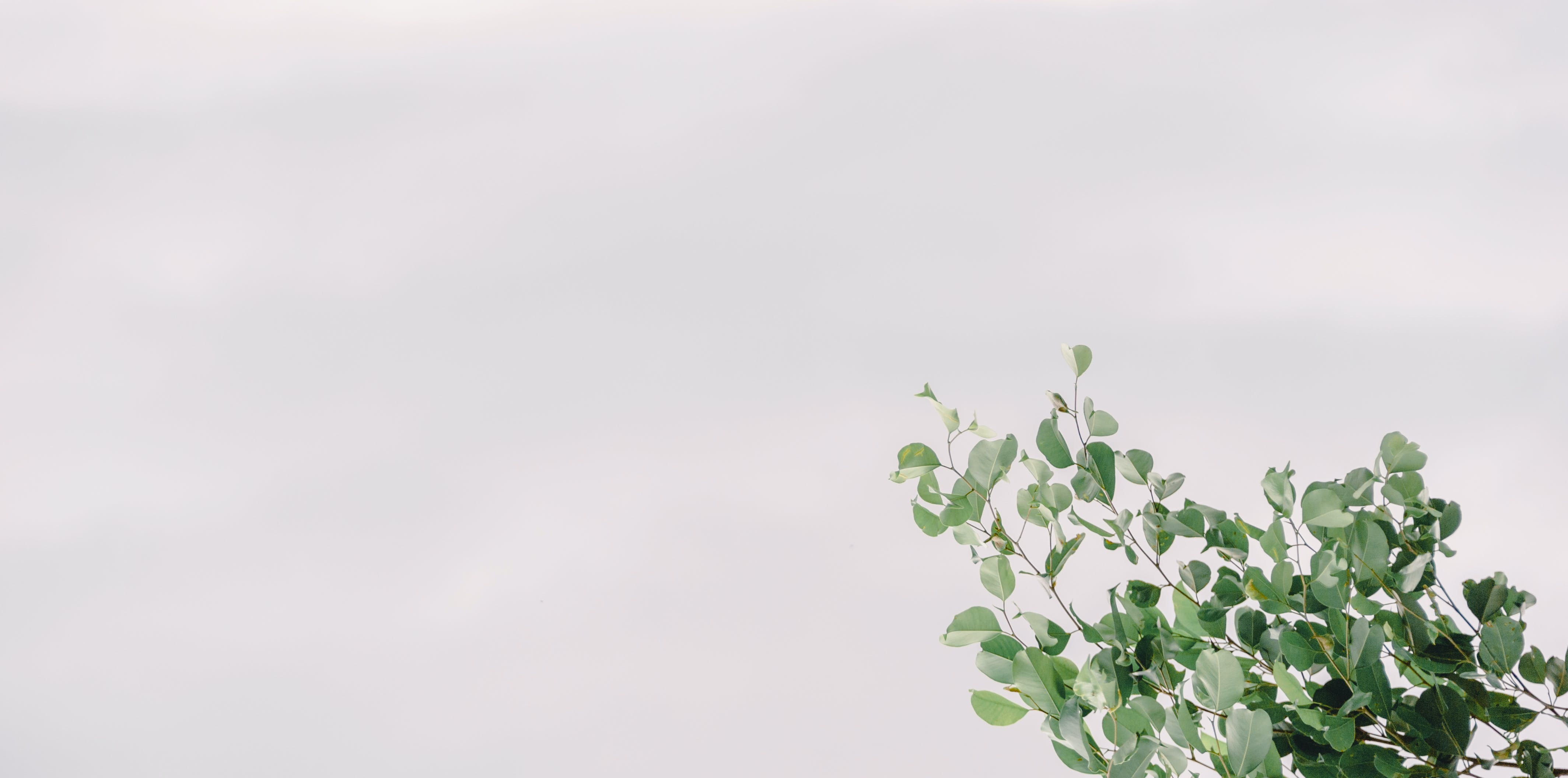 Photo of Green Plant Under Clear Sky
