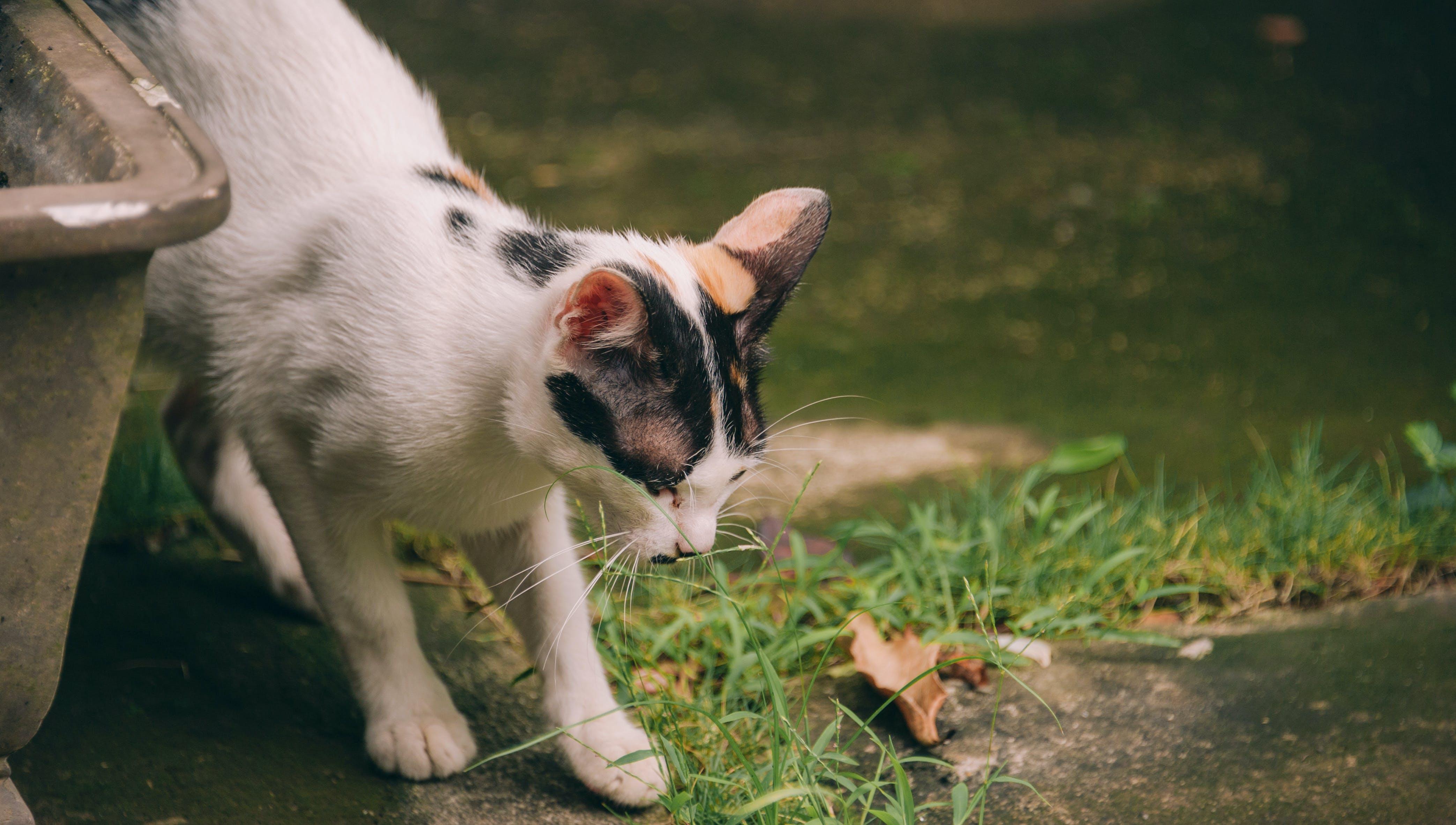 Short-fur White and Black Cat Near Pond