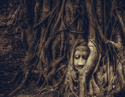 Photos gratuites de ayutthaya, temple bouddhiste, thaïlande