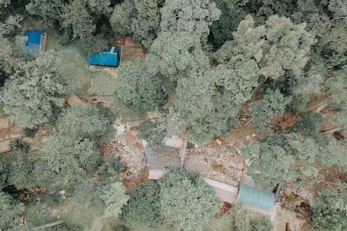 Darmowe zdjęcie z galerii z kolor, na dworze, na zewnątrz, pora roku