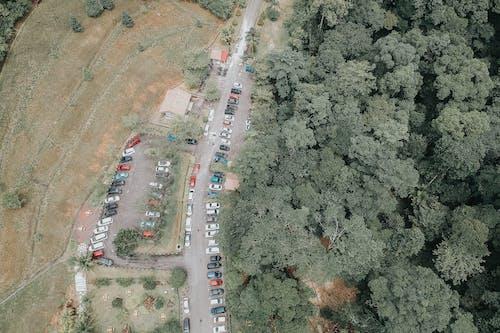 ağaçlar, alan, arabalar, geniş açılı çekim içeren Ücretsiz stok fotoğraf