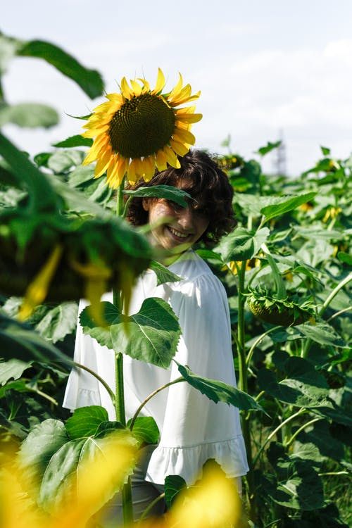 Woman Standing on Sunflower Field