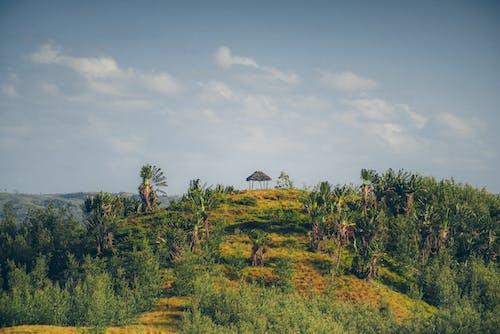 คลังภาพถ่ายฟรี ของ มาดากัสการ์