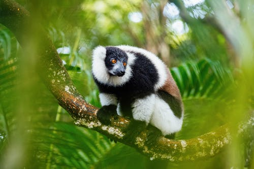 Black, Brown, and White Animal on Tree