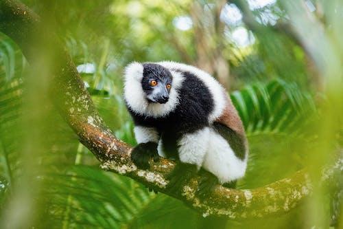 動物, 動物攝影, 哺乳動物, 天性 的 免费素材图片
