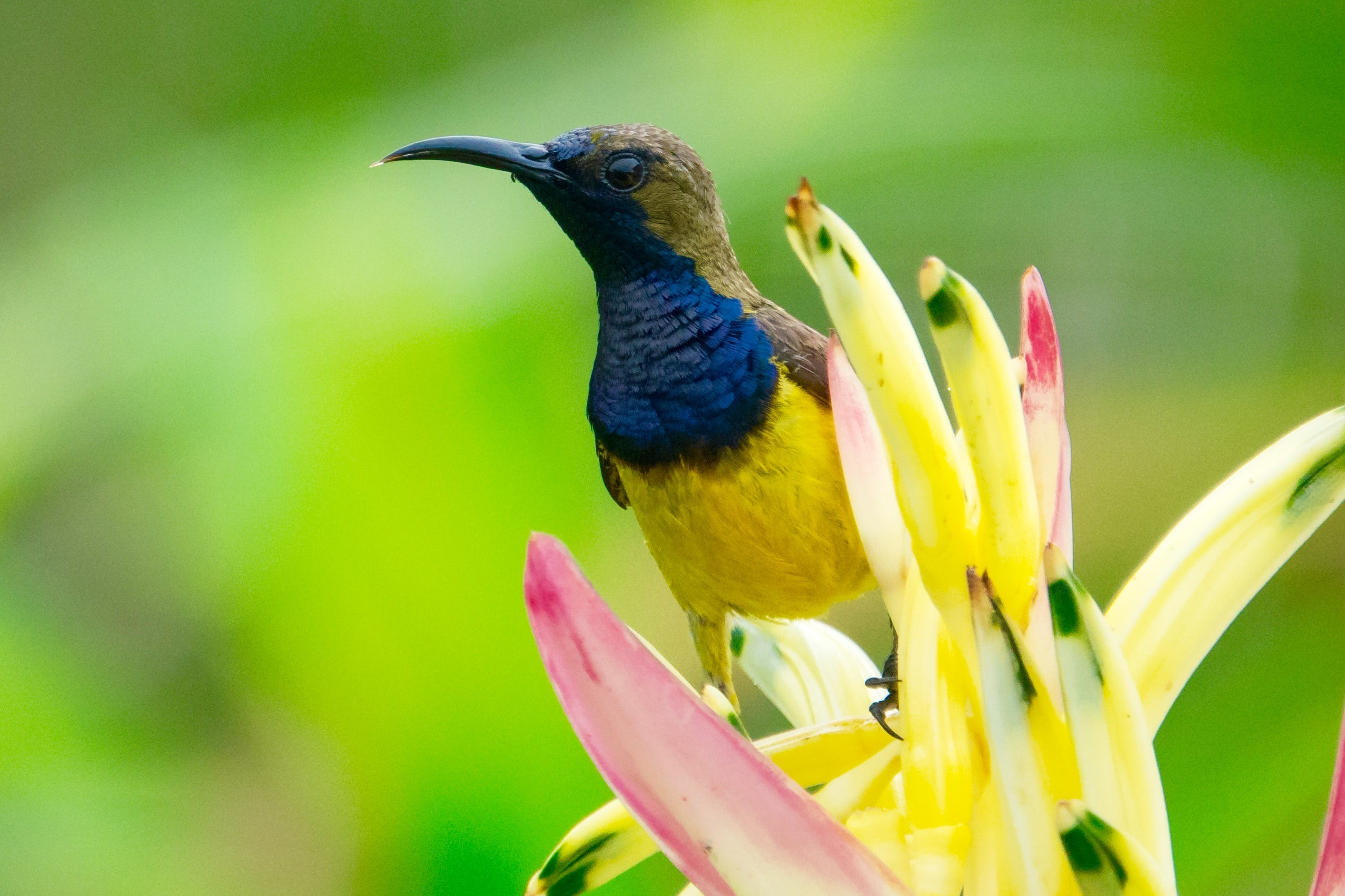 Yellow Blue and Brown Bird on the Top of Yellow Petaled Flower Photography