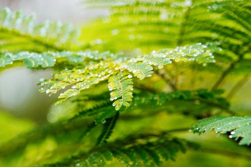Free stock photo of green leaves, water droplets, water drops