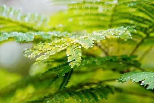 คลังภาพถ่ายฟรี ของ หยดน้ำ, ใบไม้สีเขียว