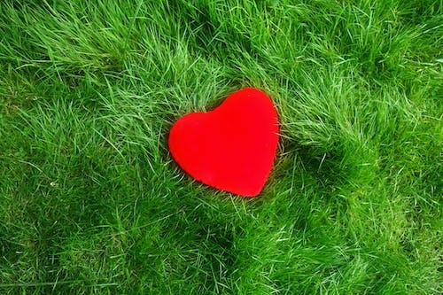 Free stock photo of heart, love, romance, romantic