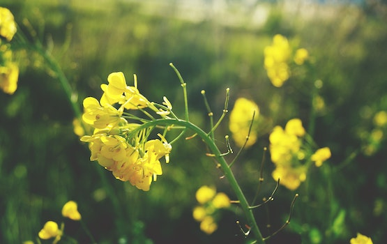 Free stock photo of close-up view, flower, yellow flowers