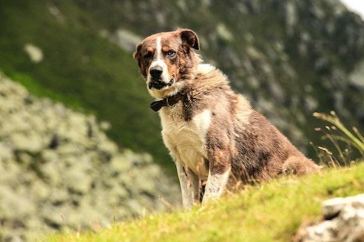Free stock photo of animal, dog, outside, pet