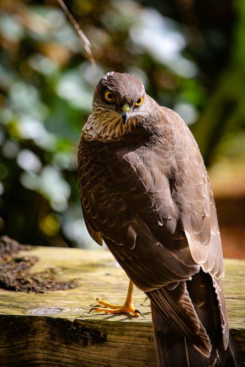 Brown Hawk on Brown Wooden Slab