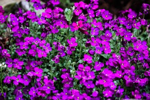Бесплатное стоковое фото с садовый цветок