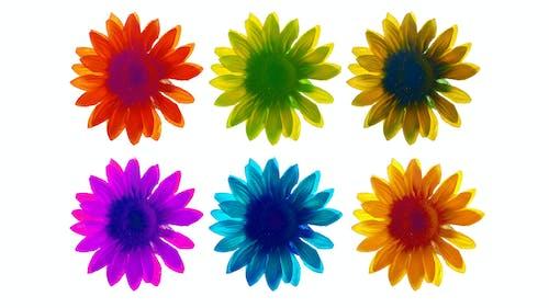 Ingyenes stockfotó fehér háttér, hamis virág, háttérkép, kék témában