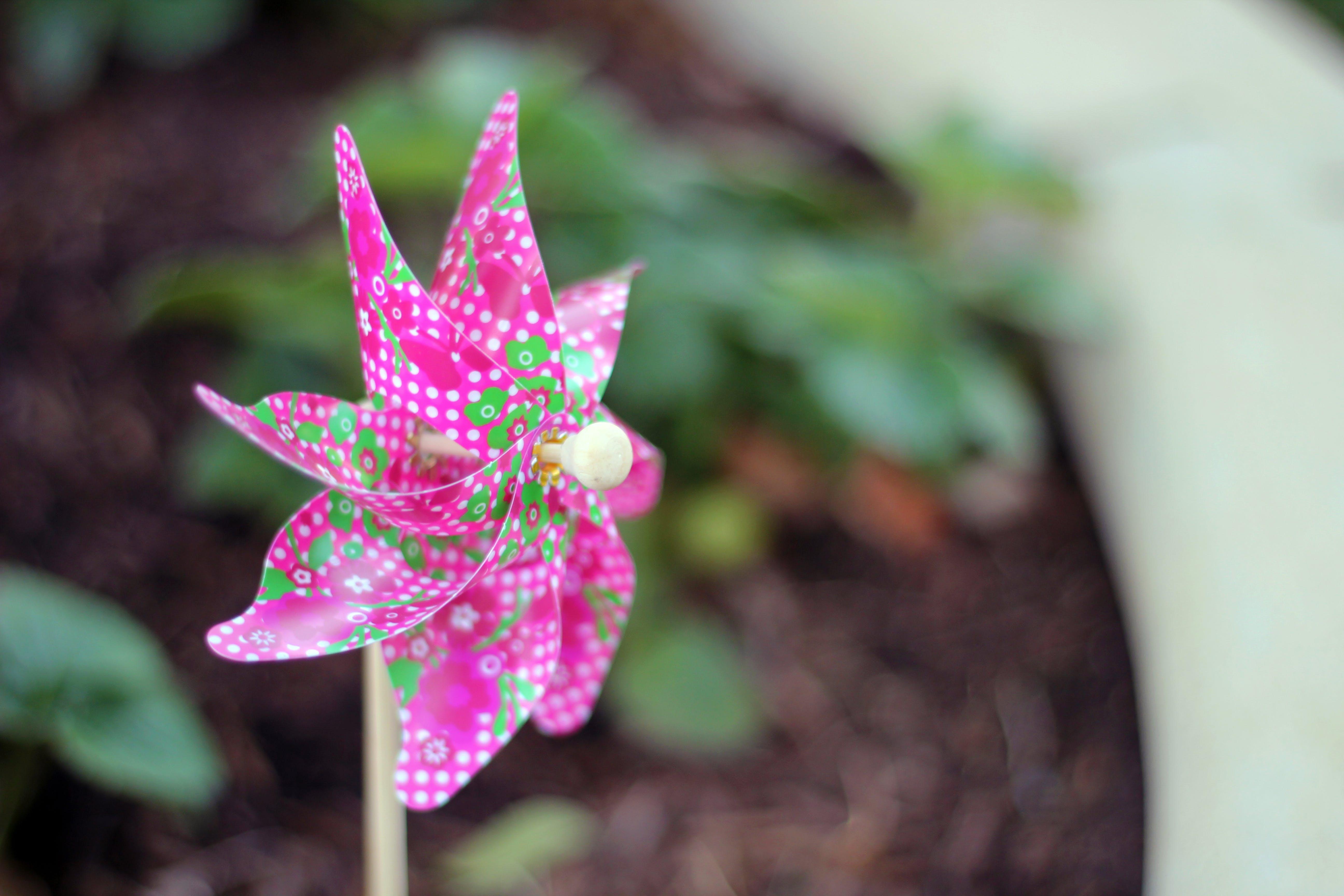 Free stock photo of pinwheel