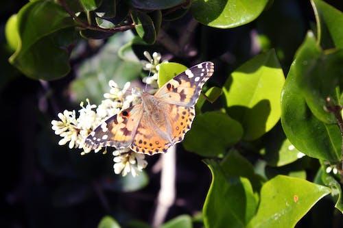 Δωρεάν στοκ φωτογραφιών με πεταλούδα
