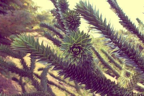 Gratis arkivbilde med bakgrunn, moder natur, mørkegrønne planter, natur