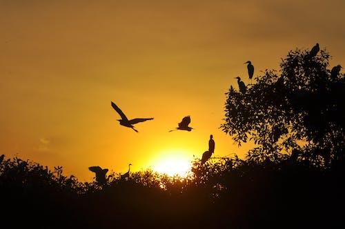 Imagine de stoc gratuită din #apus de soare