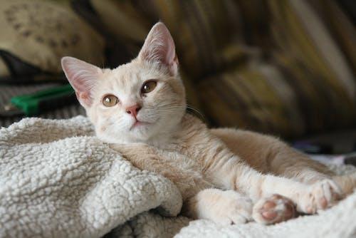 Gratis arkivbilde med bedårende, dyr, husdyr, katt