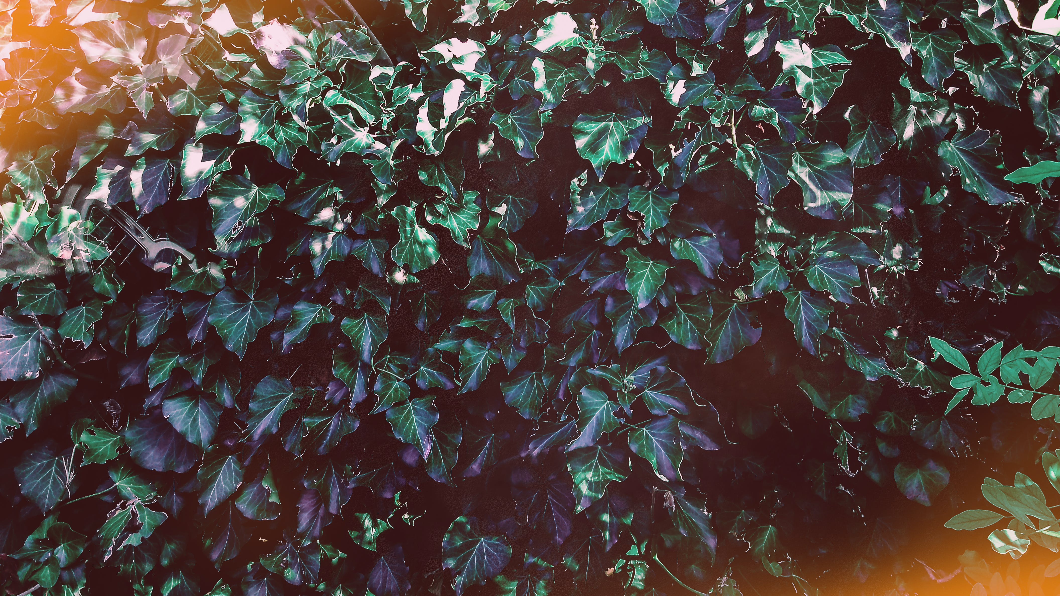 Free stock photo of dark green plants, green leaves, nature